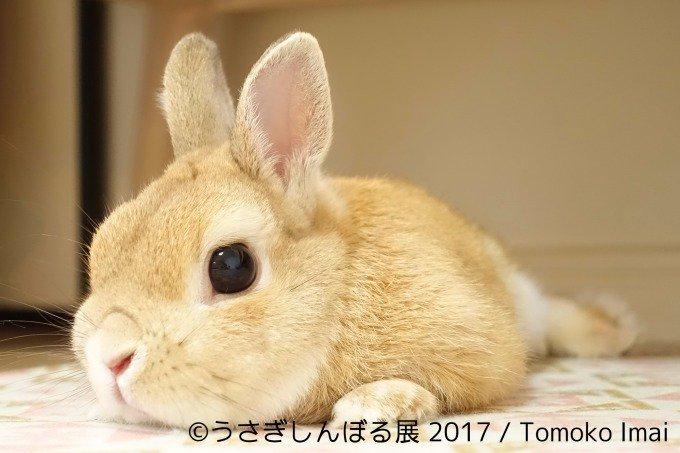 2017年【うさぎしんぼる展in名古屋】のアクセスや期間や時間は?